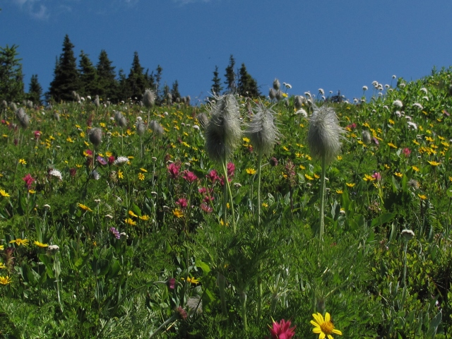 Alpine meadow on the way to the top of Mt. Dingley, BC, Canada