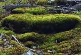 moss covering the rock